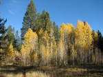 Fall Colors in Bend
