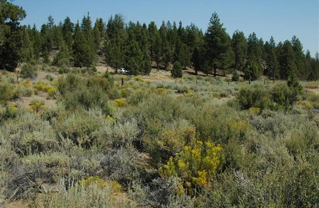 rare bend acreage from sage meadow