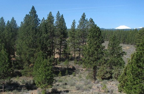surrounded by thousands of acres of deschutes national forest