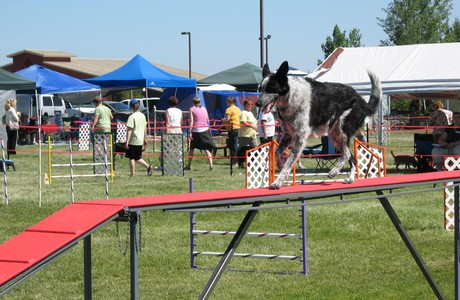 Mt Bachelor Kennel Club Dog Show