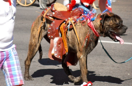 Bend's Fourth of July Pet Parade