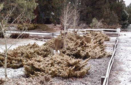 Even the deer want to hang at 20964 West View in Bend OR