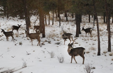 This lot in North rim provides a wonderful safe playground for a passel of kids or a herd of deer