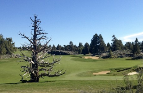 Ghost tree on the Fazio course at Pronghorn